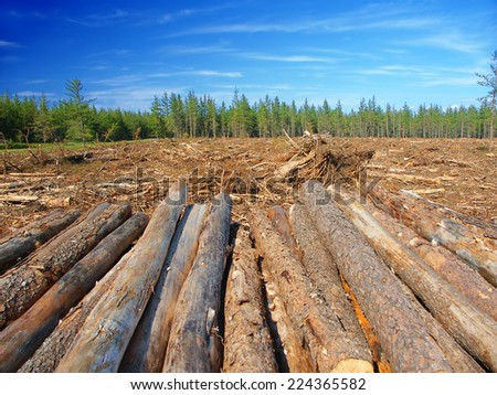 Large area of northern Michigan where Jack Pines (Pinus banksiana) have been logged - stock photo