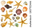 Large Assortment of sea shells individually isolated on white  - stock photo