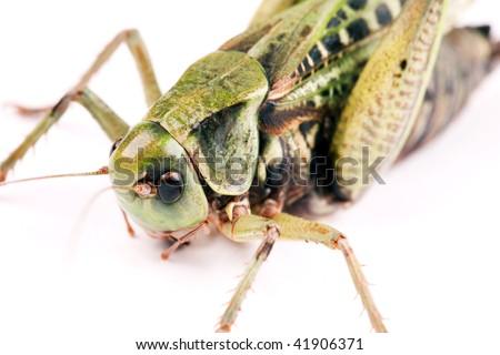 large beetle isolated on white background - stock photo