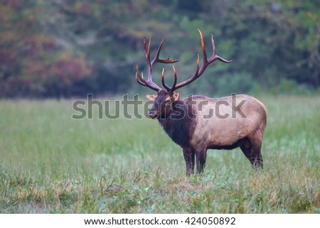 Large bull elk with huge rack looking left - stock photo