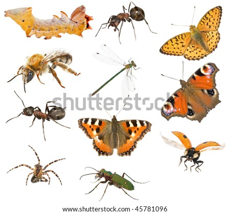 large collection of different insects isolated on white background - stock photo