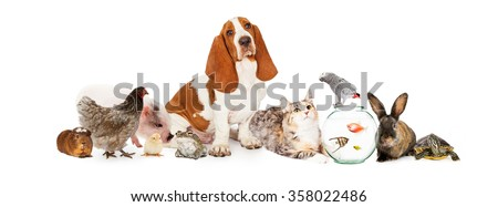 Large collection of domestic pets interacting together. Image sized to fit a popular social media timeline cover photo placeholder. - stock photo