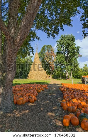 Large Corn Stalk Tepee and Pumpkins For Sale at Farm Market - stock photo