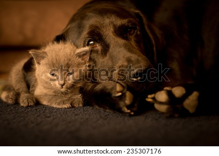 large dog and a small cat sleep together - stock photo