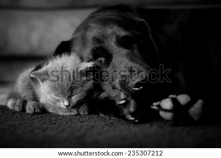large dog and a small cat sleep together