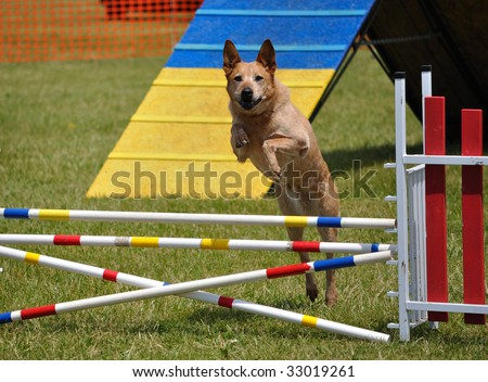 Large dog leaping over a double jump at  agility trial, copy space - stock photo