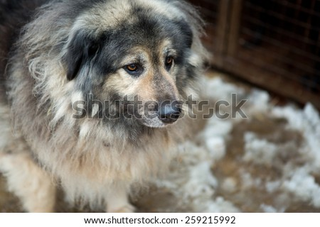 Large dog on the background of the cells shelter for homeless animals - stock photo