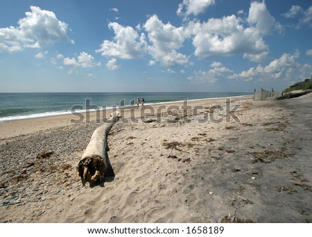 large driftwood on beach