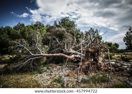 Large fallen tree - stock photo