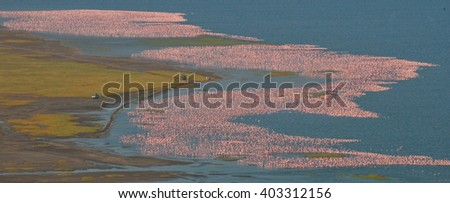 Large flock of flamingos on the lake. Taking pictures with the bird's-eye view. Kenya. Africa. Nakuru National Park. Lake Bogoria National Reserve. An excellent illustration.  - stock photo
