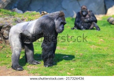 Large gorilla and the rest of the family on green lawn - stock photo