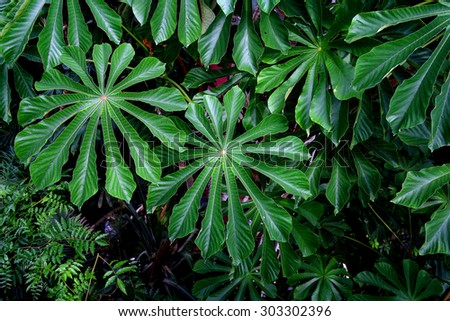 Large green leaves in a glasshouse - stock photo
