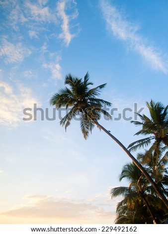 Large green palmtrees on a tropical beach over a blue sky - stock photo