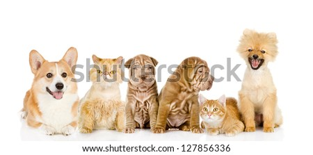 Large group of cats and dogs in front. looking at camera. isolated on white background