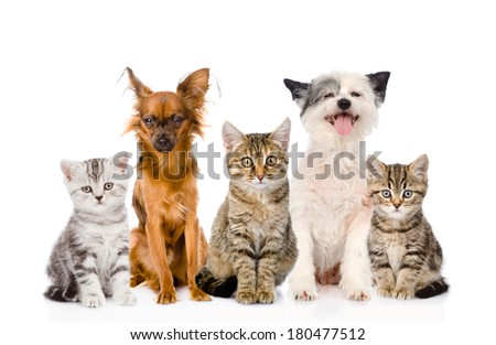 large group of cats and dogs sitting in front. isolated on white background - stock photo