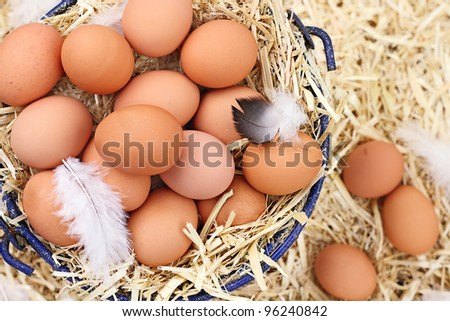 Large group of fresh free range eggs in a nest of straw. - stock photo
