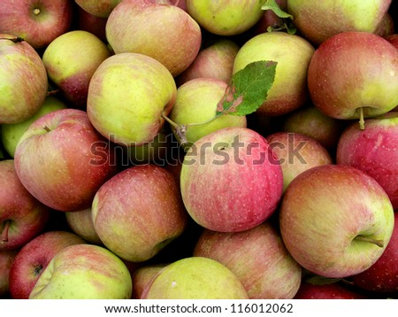 Large group of just picked apples at farm market - stock photo
