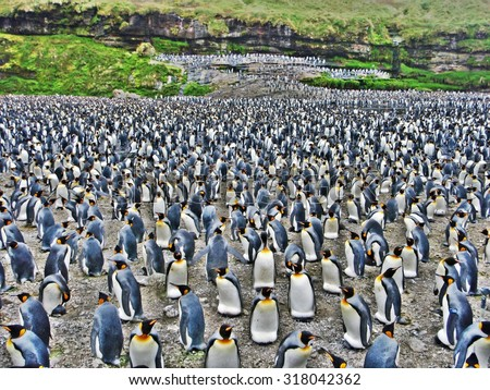 Large group of penguins - stock photo