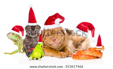 Large group of pets in red Santa hats. isolated on white background - stock photo