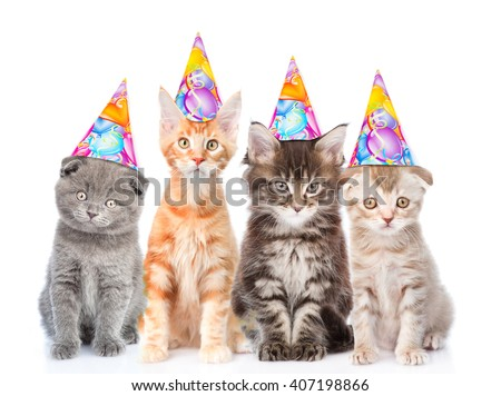 Large group of small cats with birthday hats. isolated on white background