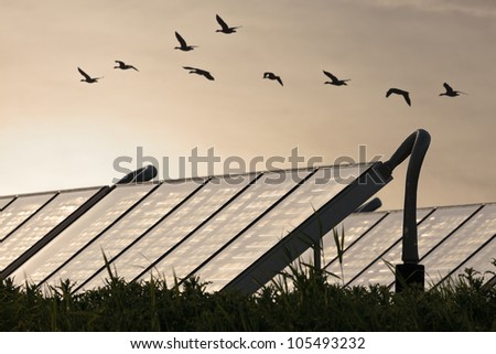 Large group of Solar water heating systems with geese flying by - stock photo