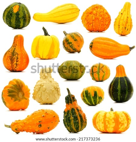 Large group of unique isolated autumn gourds - stock photo