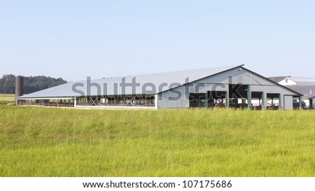 Large, Industrial Cattle Barn/Cattle Barn/A large barn used for breeding and housing many dairy cows - stock photo