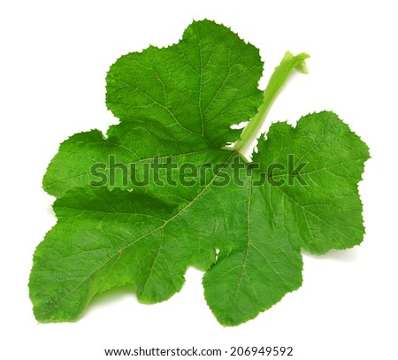 Large leaf pumpkin isolated on white background - stock photo