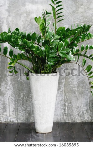 Large leafy plant in a modern concrete pot.