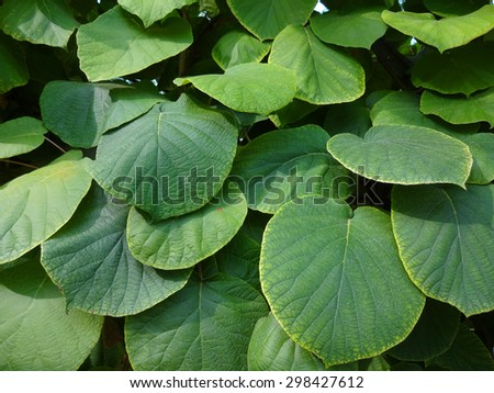 Large leaves of a green plant in the town square - stock photo