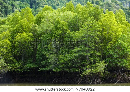 large mangrove forest in south Thailand