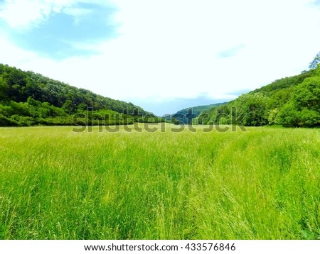 Large meadow and deciduous forest in wild nature