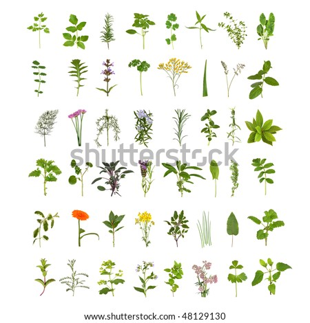 Large medicinal and culinary herb flower and leaf collection, isolated over white background. Forty eight herbs. - stock photo