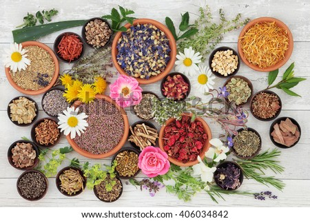 Large medicinal herb and flower selection used in natural alternative medicine over distressed wooden background. - stock photo