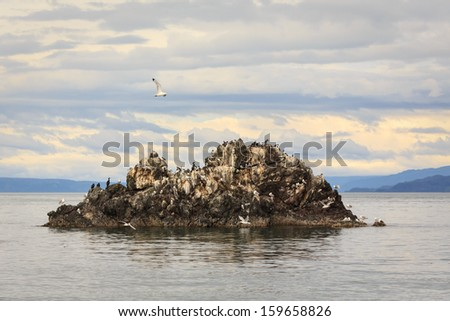 Large number of a variety of birds roost on a large rock outcropping off Alaskan shore in summertime - stock photo
