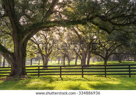 Large oak tree branch with farm fence in the rural countryside at a farm or ranch looking serene peaceful calm relaxing beautiful southern tranquil  - stock photo