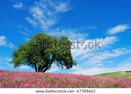 Large oak tree in flowered springtime field under blue sky - stock photo
