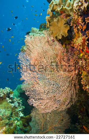 large orange colored gorgonian common sea fan and variety of colorful coral on great barrier reef, australia - stock photo