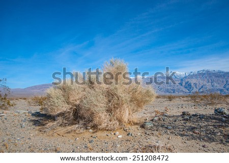 Large patch of creosote grows along the bottom of California's Death Valley National Park. - stock photo