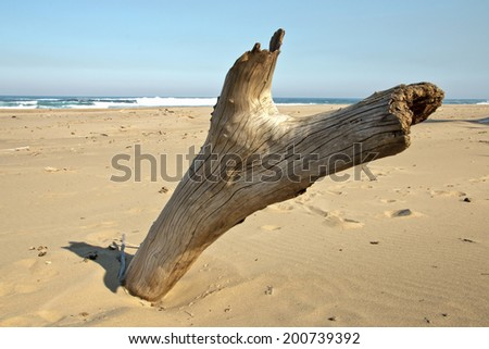 large piece of driftwood on sandy beach - stock photo