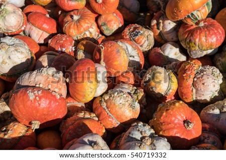 Large pile of specialty reddish pumpkins filling the entire frame