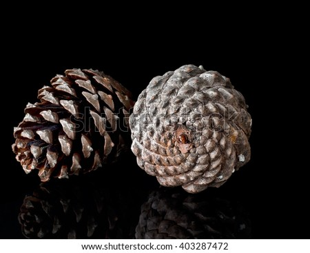 Large pine cones, side lit on shiny black for reflections. Fibonacci in nature.. - stock photo