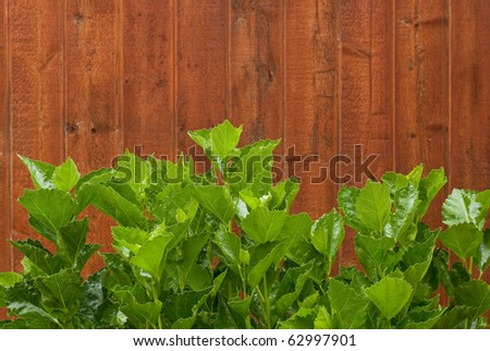 Large Plant Leaves with Red Wood Fence Background - stock photo