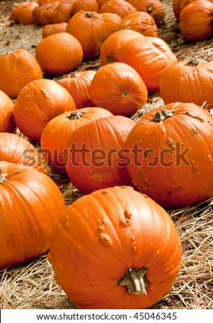 Large pumpkins for sale on pine straw