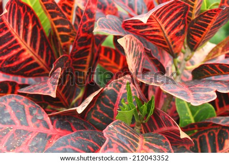 Large red leafs in the garden - stock photo