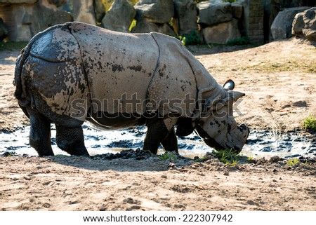 large rhino in the park - stock photo