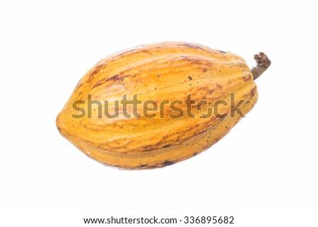 Large ripe Theobroma cacao pod isolated on white background - stock photo