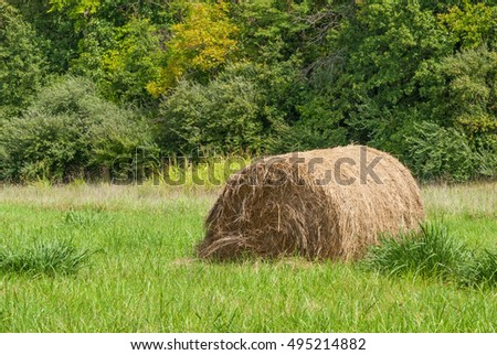 Large round hay in a overgrown hay field in late summer.
