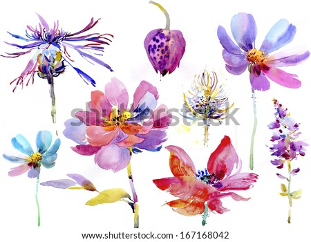 Large set of watercolor flowers for designers - stock photo