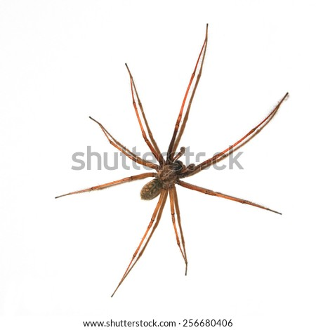 Large Spider on wall isolated on white - stock photo